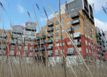 view of colourful apartment building through long grass.jpg