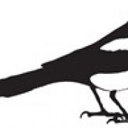 The Monocle Magpie CIC avatar image