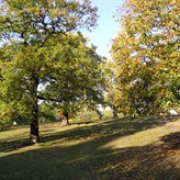 Friends of Maryon and Maryon Wilson Parks avatar image