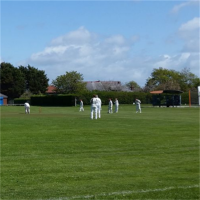 New Victoria Cricket Club avatar image