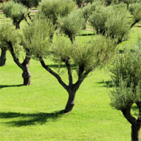 Olive Tree Cancer Support avatar image