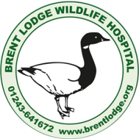 Brent Lodge Wildlife Hospital avatar image