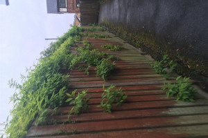 alley-4.jpg - Audenshaw alleyway tidy up and revamp!