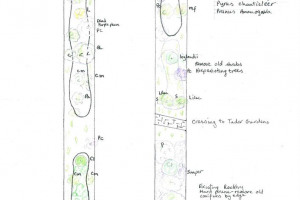 cherry-walk-page-1-of-2-page-001.jpg - Creating a Cherry Tree Walk @ West Acton