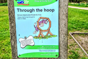 through-the-hoop.jpg - Dogs Improve Wellbeing