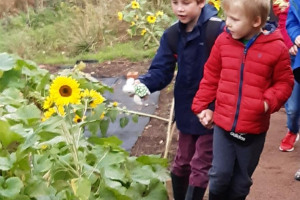 arriving-sunflowers.jpg - Woodland wellbeing centre for Worcester