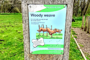 woody-weave.jpg - Dogs Improve Wellbeing