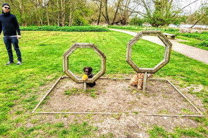 through-the-hoop-1.jpg - Dogs Improve Wellbeing