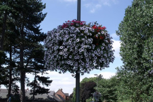 holstar-planter-on-full-bloom.jpg - Improve appearance of our Hadleigh Essex