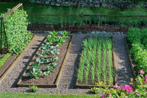 vegetable-gardening-dh.jpg - Sensory garden & Nursery supplies Africa