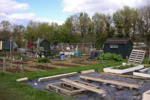 allotments-3-email.jpg - The Green Oasis of Milton Keynes