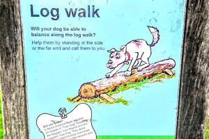 log-walk.jpg - Dogs Improve Wellbeing
