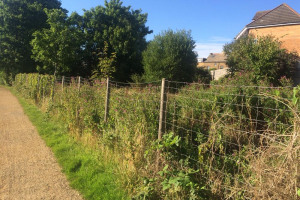 fence.jpg - TYS2 Piggeries Orchard