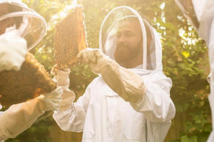 eaf-5096-a-c-191-4-b-09-8-ca-9-0227-d-22-cb-303.jpg - Bees and Refugees