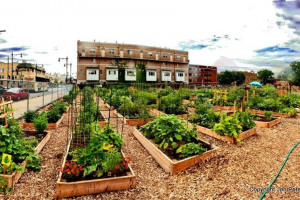 communitygarden.jpg - Community Garden on Boleyn Road
