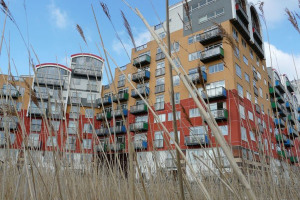view of colourful apartment building through long grass.jpg - Greenwich Outdoor Classroom