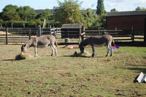 Gorse Hill City Farm - Disabled Parking