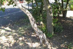 neglected-tree-low-res-1.jpg - TYS2 garden 4 everyone
