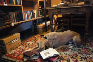 marvin-with-his-nose-in-books.jpg - Union Chapel - Sunday School Stories