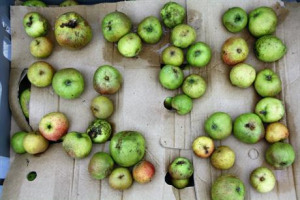 Heaton Park Community Orchard