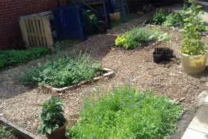 garden-2.png - Community Garden based in a GP surgery