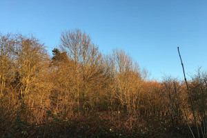 winter-moon.jpg - Woodland wellbeing centre for Worcester