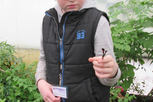 volunteer-with-butterfly.jpg - Butterfly House - Victoria Park