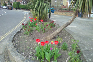 west-bed-12-th-april-2018-tulips.jpg - Southfield Flowerbeds Revamp