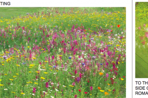 wildflower and bulb planting.png - Roman Gardens, Castlefield