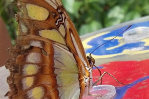 pic-1.jpg - Butterfly House Project