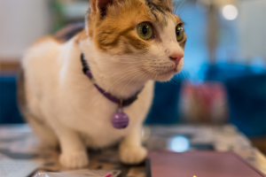 119024701-328428875161572-2810137976479010895-n.png - Community Rescue Cat Cafe