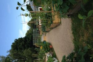 goodpaths.jpg - Safe paths for Clapham community garden