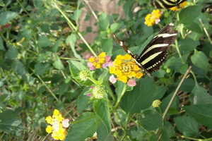 20160512-144242.jpg - Butterfly House Project