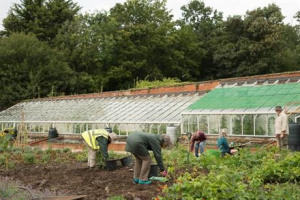Community Food Growing at Bedfords Park