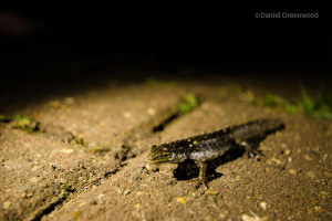 rs-164-newt-2016-copyright-daniel-greenwood-lwt-27.jpg - Help reopen Camley Street Natural Park
