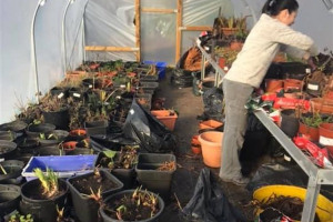 polytunnel-feb-19.jpg - Learn Grow Share