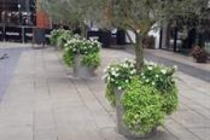 Bring trees to Palmers Green high street