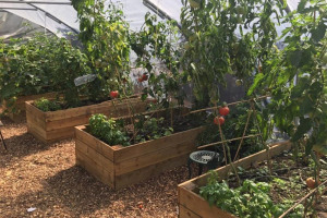 cultivate-london-salopian-kitchen-garden-august-2016-1024.jpeg - Growing Ethelburga Estate