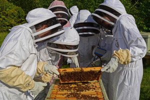 170503-st-hildas-bee-check-hive-tool-smoker-super-apiary-3-c.jpg - Bee Workers to Key Workers