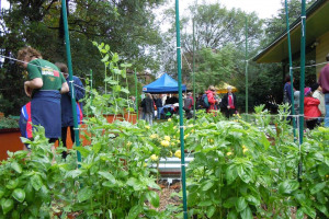 pics-031.jpg - Community Garden on Boleyn Road