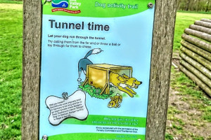 tunnel-time.jpg - Dogs Improve Wellbeing