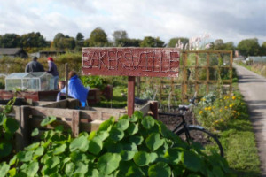 bakersvill-allotment.jpg - Allotments for the Humber Centre, Hull