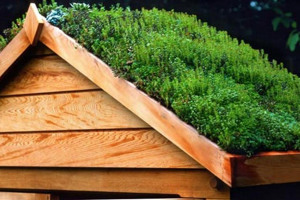 a-green-roof-on-a-shed-008.jpg - Learn Grow Share