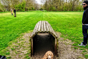 tunnel-time-1.jpg - Dogs Improve Wellbeing