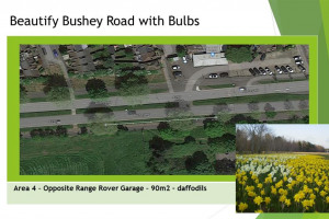 slide-4.jpg - Beautify Bushey Road with Bulbs