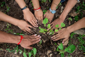 tree-planting-cambodia-2014-luc-forsyth-50-1024-x-683.jpg - Environment Friendly