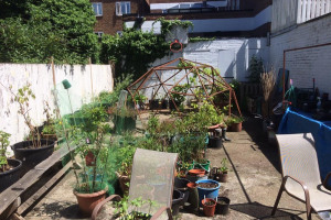 img-2742.jpg - Growing a community and wellbeing garden