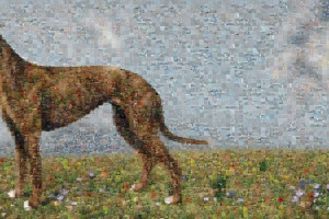 Greyhound_Final_AW_A4_SMALL.jpg - SEE3 Suburban Safari