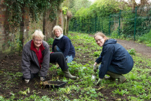 planting bluebells and snowdrops ccu.jpg - Radbourne Robin Project