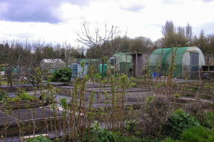 allotments-6-email.jpg - The Green Oasis of Milton Keynes